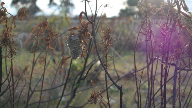 Wasps Nest 1